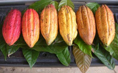 El chocolate y el cacao, ¡entre el misterio y la ciencia!