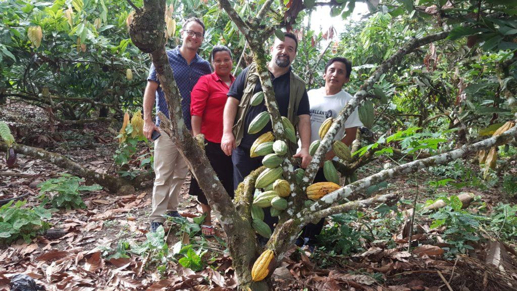 Cacao Pincay 2016 By Silvio Bessone